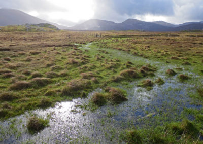 Morning light, bog, Isle of Lewis