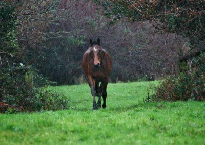 Arthur, Dartmoor