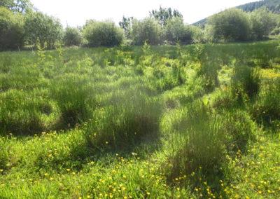 Moya's labyrinth, Cósan Ciúin, Leitrim, Ireland