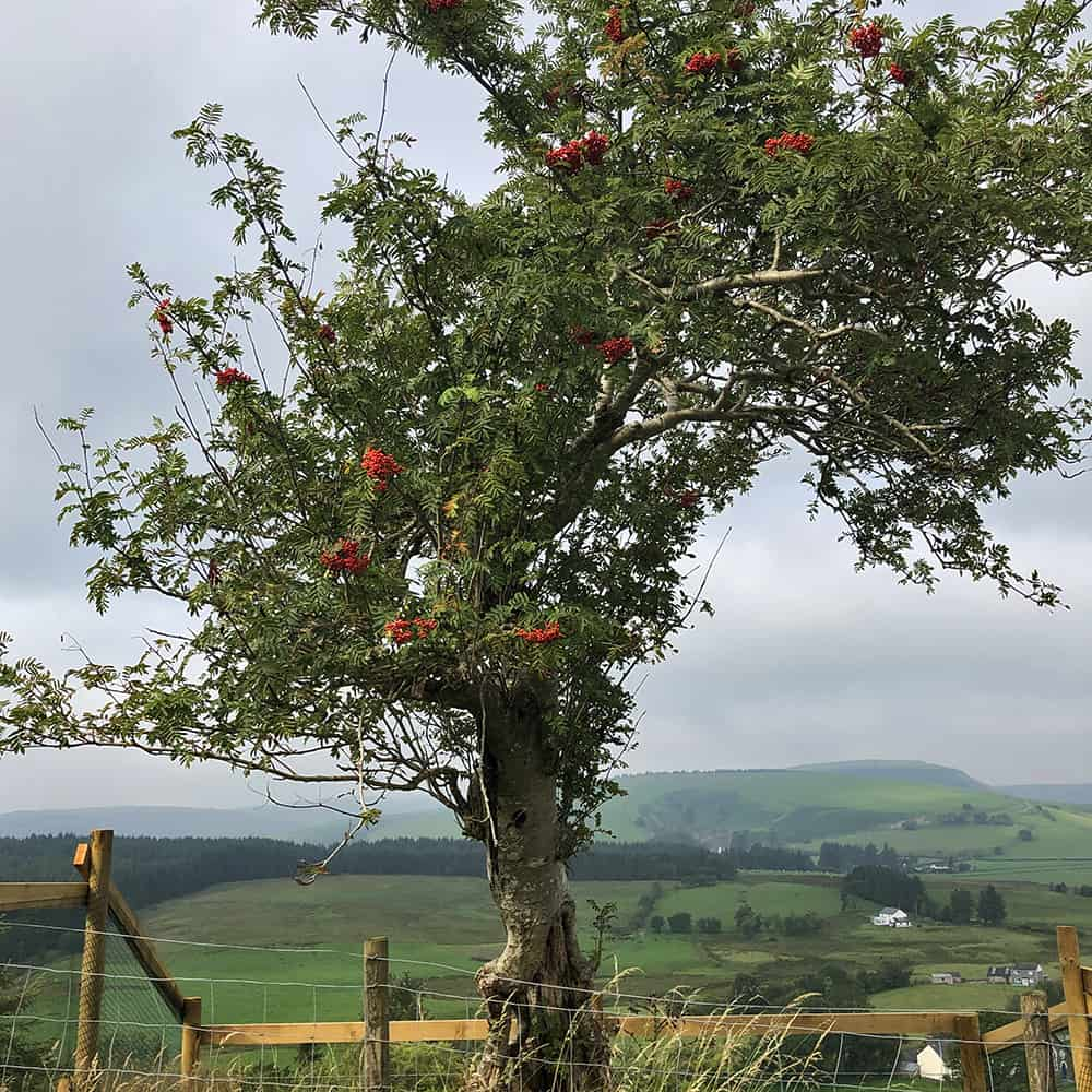 Love, the imagination of the heart – and that tree again